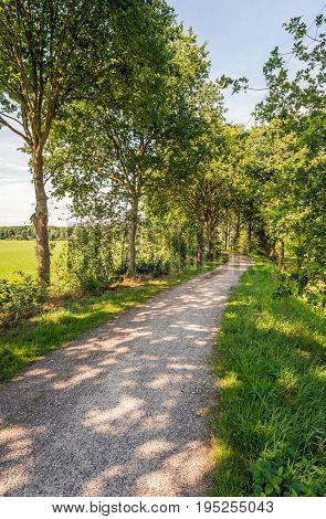 Narrow winding path in a rural landscape with rows of trees on either side. It is a sunny day in the summer season.