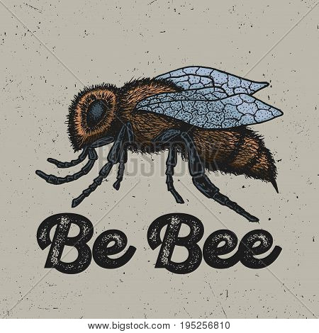 Creative Animal Poster with ink hand drawn yellow bee in the centre vector illustration