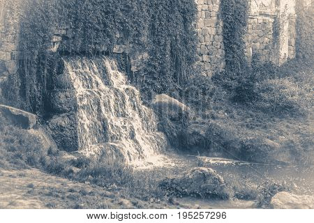 Old vintage photos. Park waterfall grass leaves close-up copy space