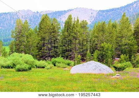 Lush green meadow surrounded by Pine Trees and mountains taken at Horseshoe Meadow in the Sierra Nevada Mountains, CA