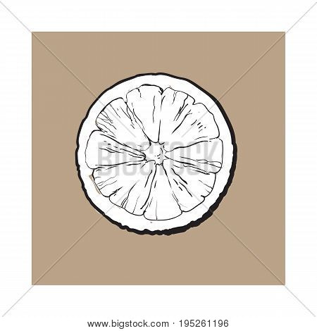 Top view round slice, half of ripe lime, sketch style vector illustration on brown background. Hand drawn lime cut in half, round slice