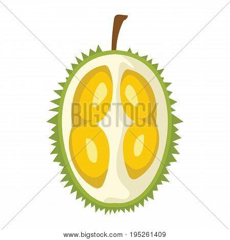 Durian design juicy fresh fruit icon vector template. Raw durian. Eco bio health food