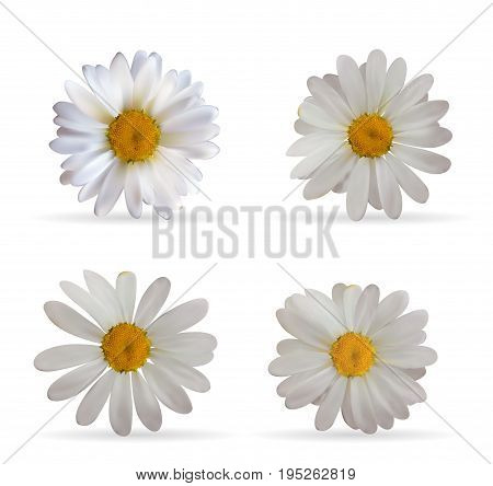 Colorful Naturalistic Beautiful 3D Chamomile Set. Organic Cosmetic Ingredients Isolated Vector Illustration. Eps10