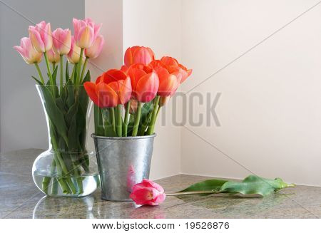 vases of tulips on kitchen countertop - room for copy