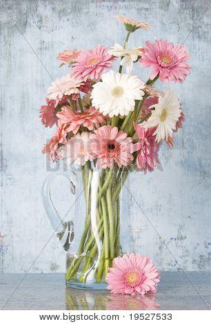 jug of pink gerber daisies on grunge blue background