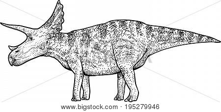Triceratops illustration, drawing, engraving, ink, line art