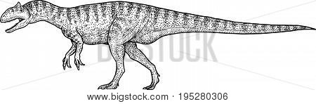 Allosaurus illustration, drawing, engraving, ink, line art