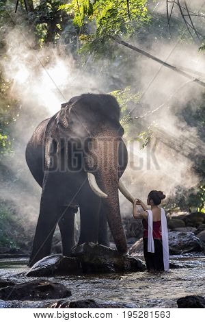 Pretty Girl In Traditional Thai Costumes Touching Elephant's Ivory In The Image Contains Grain And N