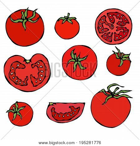 Set of Fresh Red Tomatoes. Half of Tomato, Slice of Tomato, Cherry Tomato. Realistic Doodle Cartoon Style Hand Drawn Sketch Vector Illustration.Isolated On a White Background.