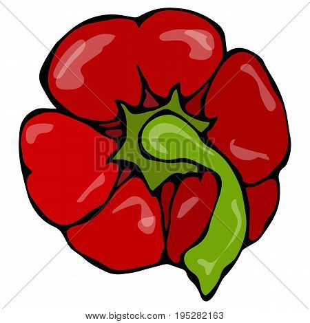Red Paprika, Bell Pepper or Sweet Bulgarian Pepper Top View. Realistic and Doodle Style Hand Drawn Sketch Vector Illustration.Isolated On a White Background.