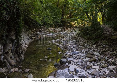 transparent quiet stream of a mountain river flows among the rocks in the shadow of the forest