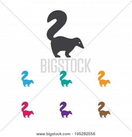 Vector Illustration Of Animal Symbol On Smelly Animal Icon. Premium Quality Isolated Skunk Element In Trendy Flat Style.