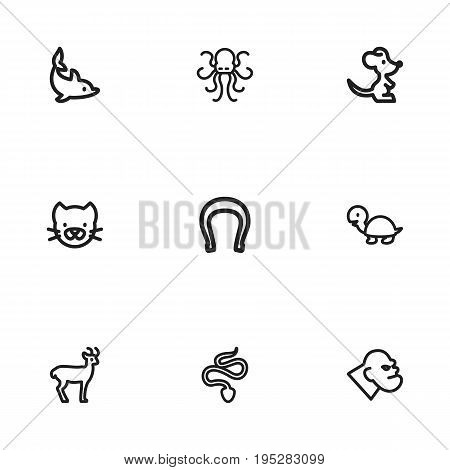 Set Of 9 Editable Zoo Icons. Includes Symbols Such As Gorilla, Snake, Poulpe And More. Can Be Used For Web, Mobile, UI And Infographic Design.
