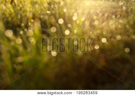 Blured dew on the grass in backlight close