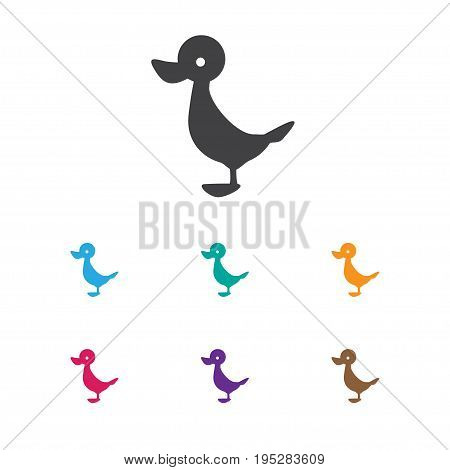 Vector Illustration Of Zoology Symbol On Duck Icon. Premium Quality Isolated Quack Element In Trendy Flat Style.