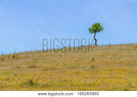 Small Cork Tree Alone In A Farm Field In Vale Seco, Santiago Do Cacem