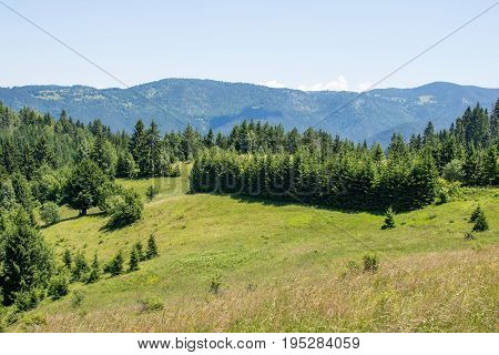 Tara Mountain Panoramic View With Blue Sky And Pine Forest