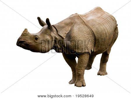 rhinoceros isolated poster