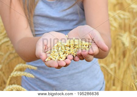 Child holding rye grains in open palms in field