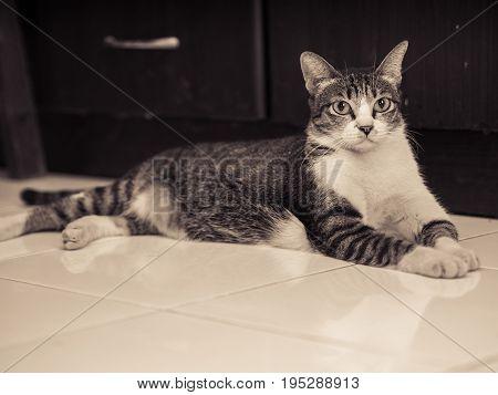 Black White Cat Lying on Floor . .