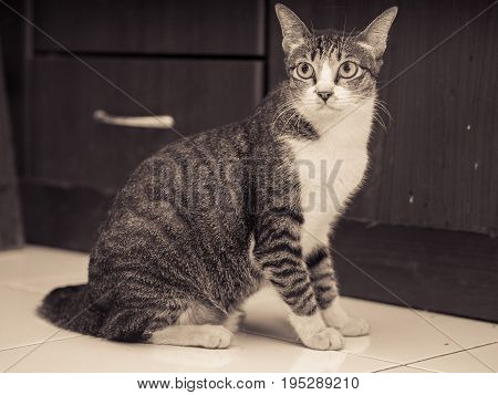 White and Black Cat Sit on The Floor
