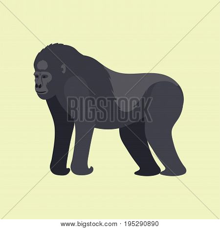 Gorila monkey rare animal vector. Cartoon macaque nature primate character. Wild zoo ape chimpanzee. Wildlife jungle animal mammal.