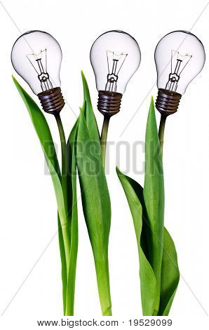 lamp bulb tulips isolated on white with clipping path