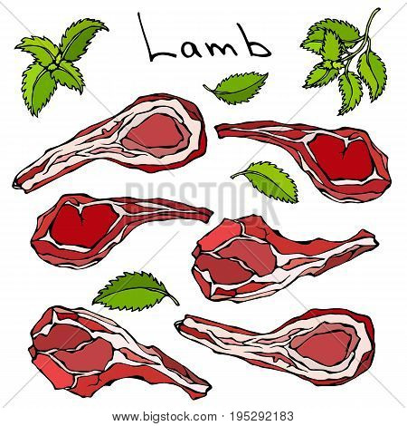 Raw Lamb Chop Rib Set. Fresh Meat Cuts. Realistic Vector Illustration Isolated Hand Drawn Doodle or Cartoon Style Sketch.