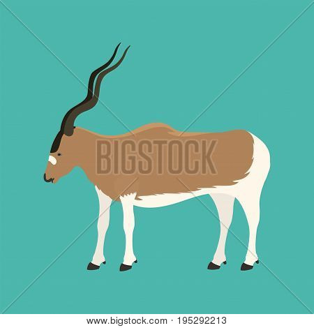 Antelope addax wildlife endangered species nature animal conservation goat mammal oryx character vector illustration. Asian biology curved herbivorous eilat safari reserve.