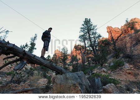 Hiker stands on the dead wood at rocky terrain in the Bryce Canyon National Park, USA