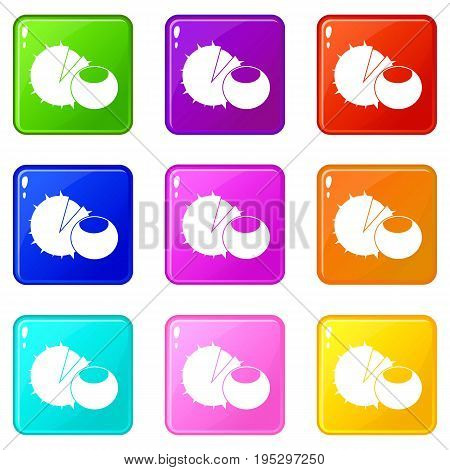 Hazelnuts icons of 9 color set isolated vector illustration