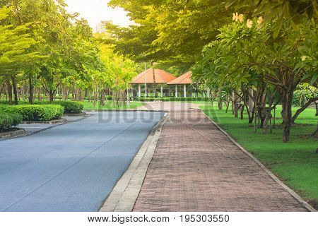 Beautiful view pathway or walkway in the park with green natural and sunlight background. (Autumn filter effect)