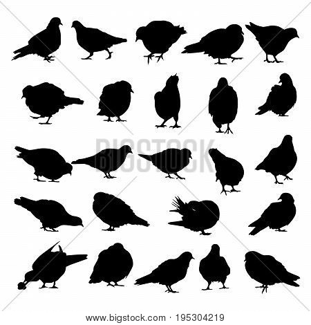 Collection of silhouettes of pigeons in various poses isolated on white background.