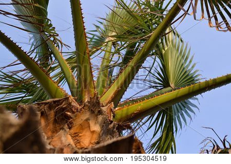 View of a palm tree from below against a blue sky