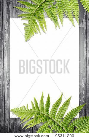 Green fern leaves on the wooden background