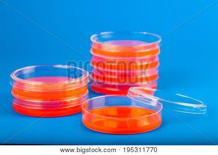 Petri dishes with blood agar