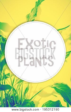 Exotic plants background with round copy space