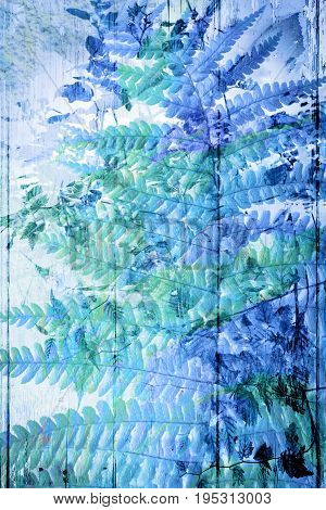 Beautiful Exotic plants Fern background with blue leaves