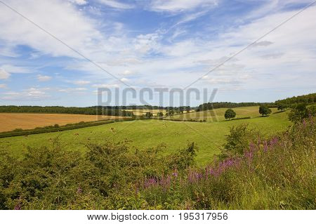English Landscape With Wildflowers