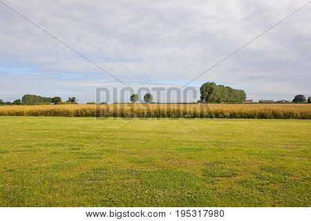 Oilseed Rape Crop And Airstrip
