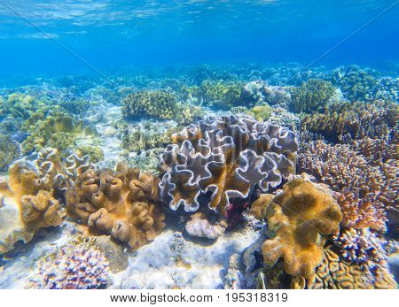Underwater landscape with coral reef. Coral undersea photo. Seashore view. Coral closeup. Sea bottom with colorful coral ecosystem. Tropical seashore snorkeling. Marine relief landscape. Tropic lagoon