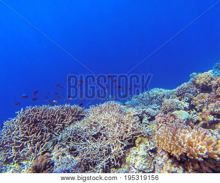Underwater landscape with coral reef and tropical fish. Coral undersea photo. Seashore view. Coral closeup. Sea bottom with colorful coral ecosystem. Tropical seashore snorkeling. Tropic marine lagoon