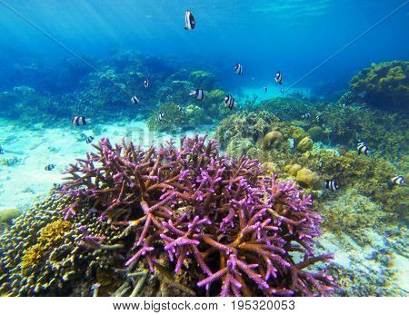 Underwater landscape with pink coral and tropical fish. Coral undersea photo. Seashore view. Coral closeup. Sea bottom with colorful coral ecosystem. Tropical seashore snorkeling. Tropic marine lagoon