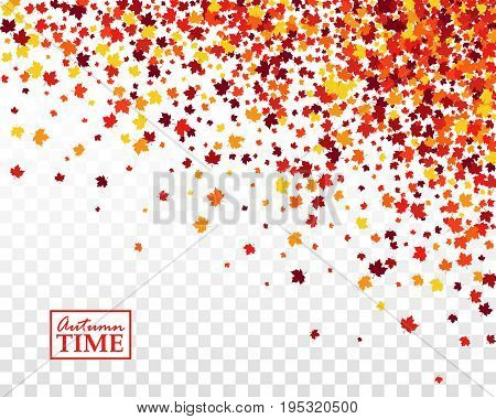 Autumn time background with scattered maple leaves in traditional Fall colors - orange yellow red brown. Vector illustration on checkered transparent background. Isolated
