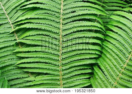 The texture of the leaves of the fern. Background green.