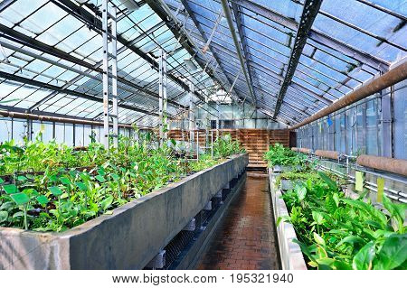 A greenhouse of a botanical garden with aquatic plants. Imitation of the swamp. Tropical climate in the greenhouse.