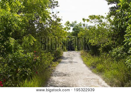 Walking path in green tropical forest. Empty way in blooming summer garden. Summer countryside hiking. Walking path in jungle. Tropical garden with bamboo and exotic greenery. Summer vacation walk