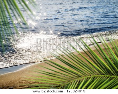empty golden color sandy beach and flowers over sunlight