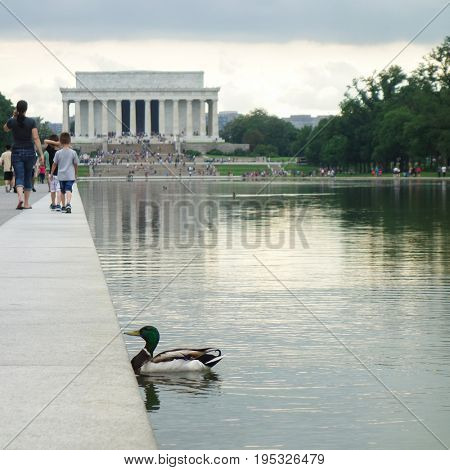 The duck and Lincoln Memorial in Washington DC