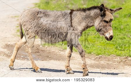 The donkey crosses the road in the village